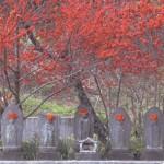 江音寺の地蔵