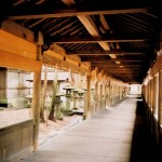 諏訪大社上社 本宮の回廊