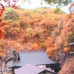 阿弥陀寺と裏山