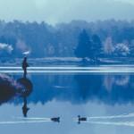 蓼の海と釣り人