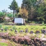 福寿草の里 板沢