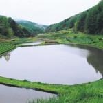 後山の田んぼ