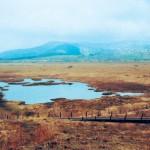 八島ヶ原湿原の 木道