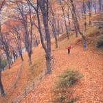 西山公園の秋