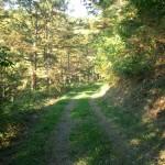 大見山林道
