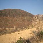 奥蓼科の荒地(茅野市)