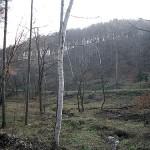 開発中止の林(茅野市)